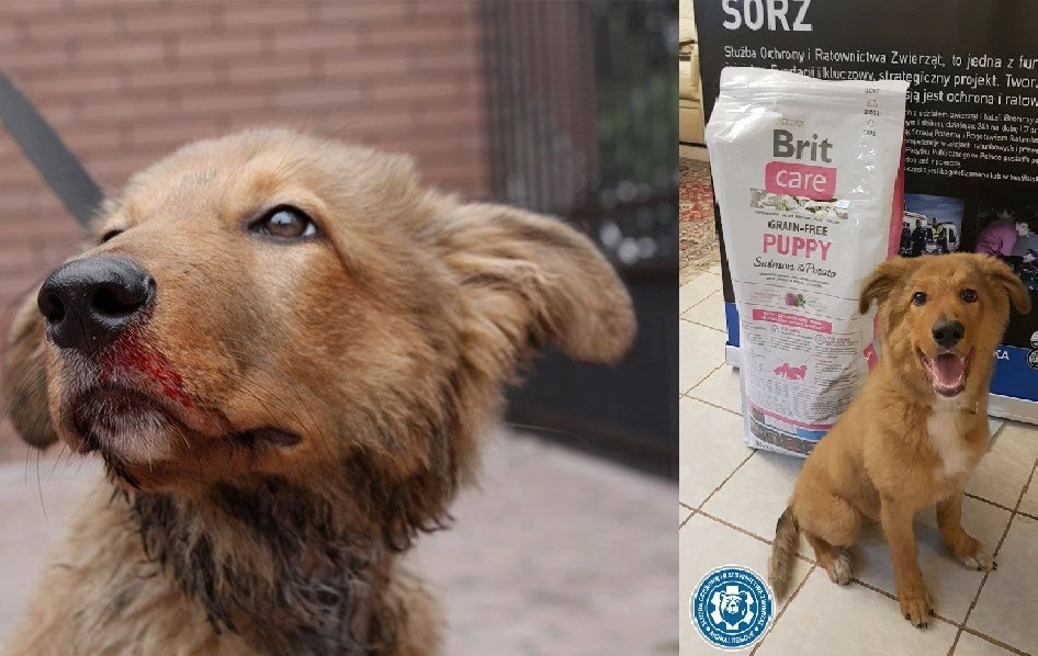 fot. Animal Rescue Polska