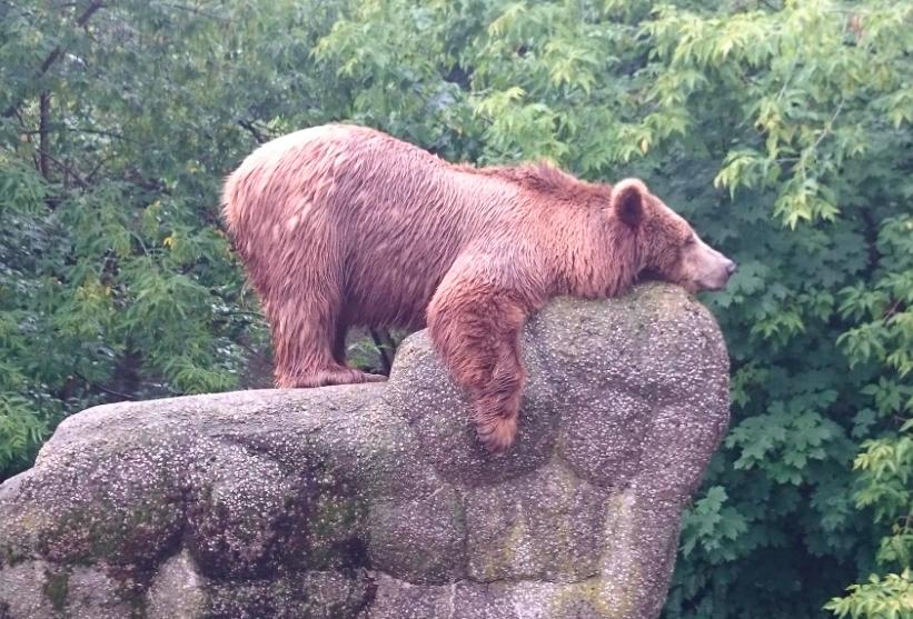 fot. warszawskie zoo