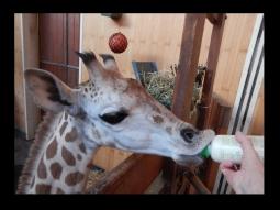 fot.Facebook/Warszawskie Zoo