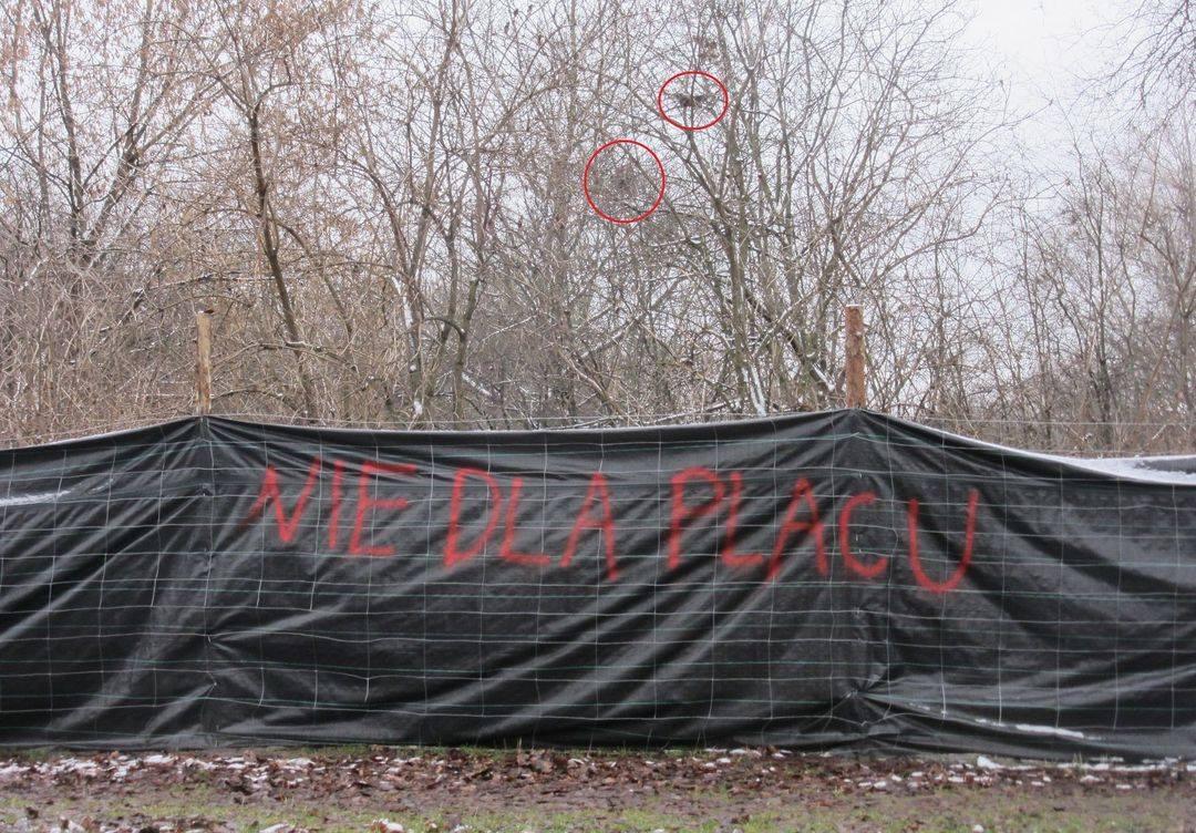fot. Facebook/Przyjaciele Dolinki - uratujmy naturalną przyrodę Dolinki Służewskiej